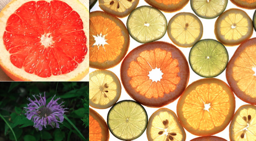 Citrus collage